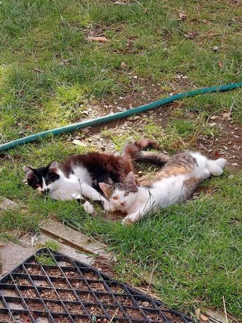 Кошенята ,котики 4 місячні віддам в добрі руки