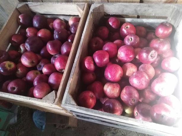 Sprzedam jabka eko