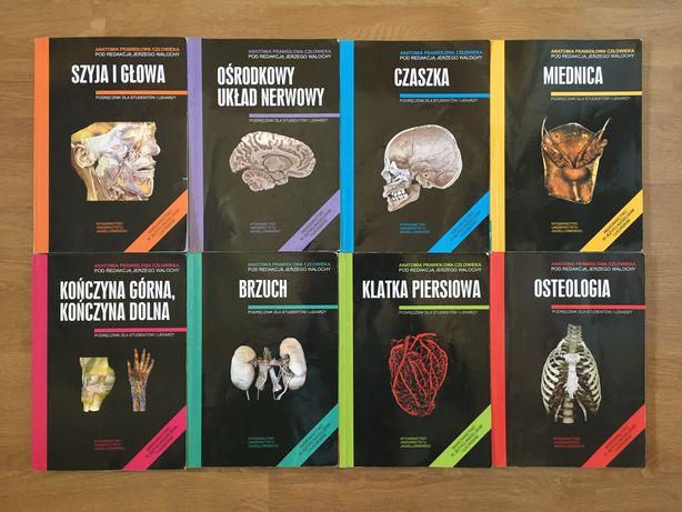 Skawina anatomia komplet