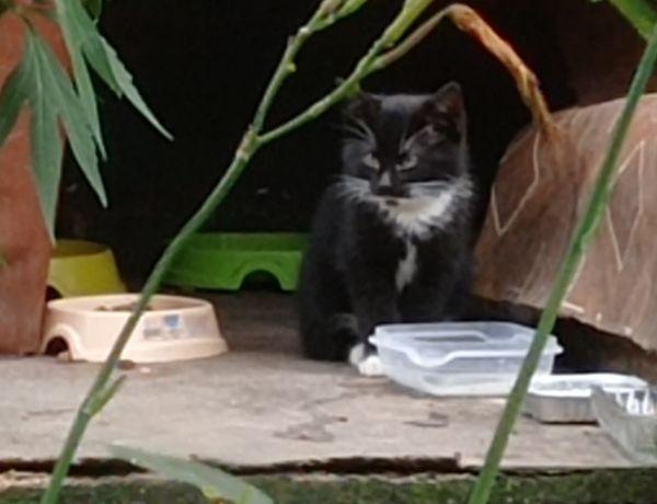 Котята ищут дом разные