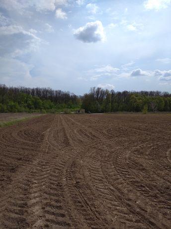 Продається земельна ділянка площею 87 соток