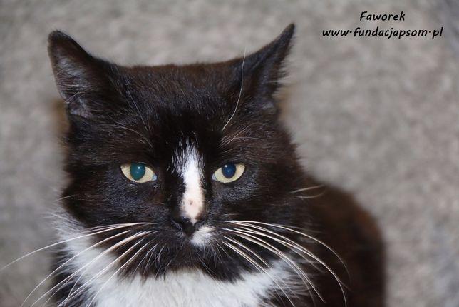 Faworek - wesoły i towarzyski kotek