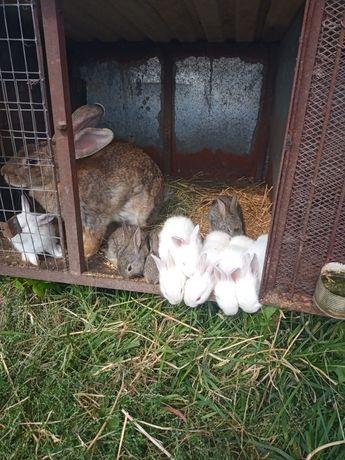 Продам кролі різних порід,ЦІНА ДОГОВІРНА !