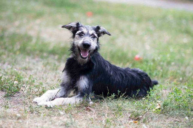 Отдам в хорошие руки молодую терьеристую собаку Чили .