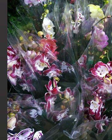Орхидеи разных сортов и расцветок на 1 и на 2 веточки