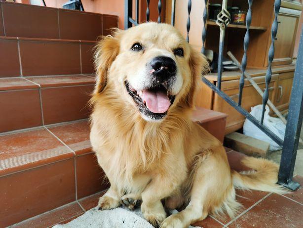 Niewielki psiak stracił dom. Pilnie poszukiwany jest nowy opiekun.