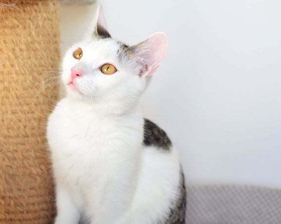Szukamy wspólnego domu dla kocich braci - Ptyśka i Tedka