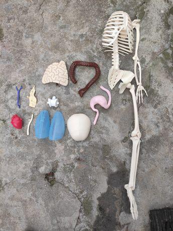 Peças da coleção o corpo humano