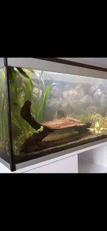 Korzeń do akwarium