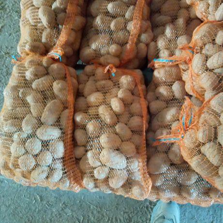 Ziemniaki jadalne Denar oraz Gala po 47 gr za kilogram