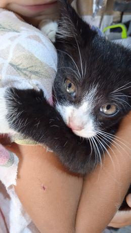 Oddam kociczkę w dobre ręce