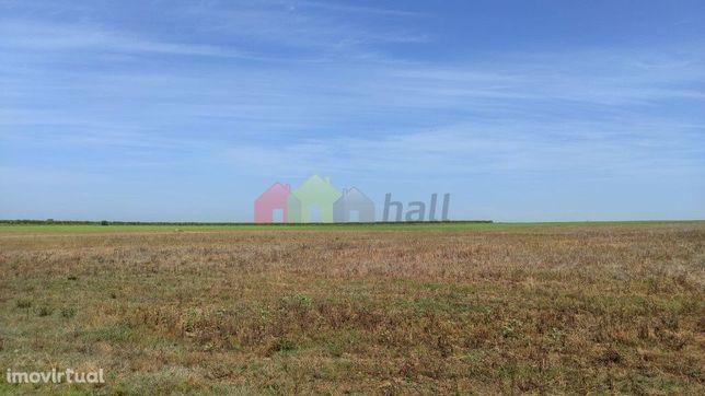Terreno Agrícola- Beringel/Trigaches