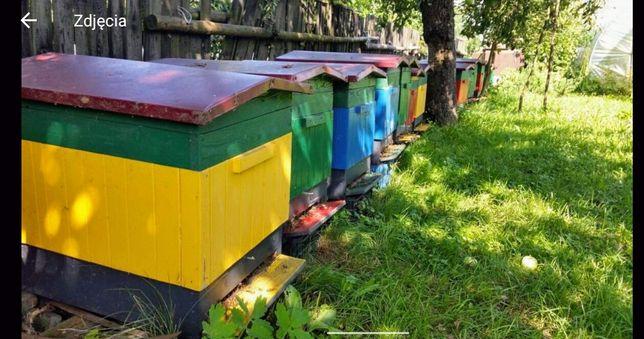 Rodzina pszczela . . . Rój . . . Roje