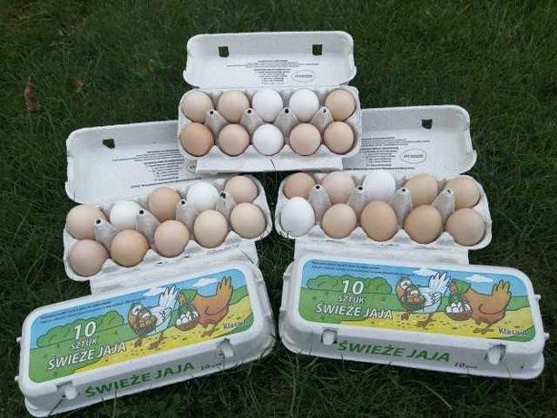 Świeże wiejskie jajka