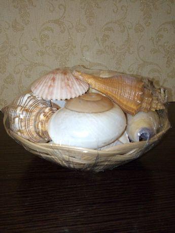 Ракушки морские, сувенир.