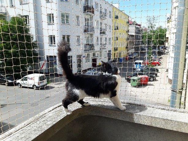 Zabezpiecznie balkonu, Siatka dla kota, i lub na gołębie.