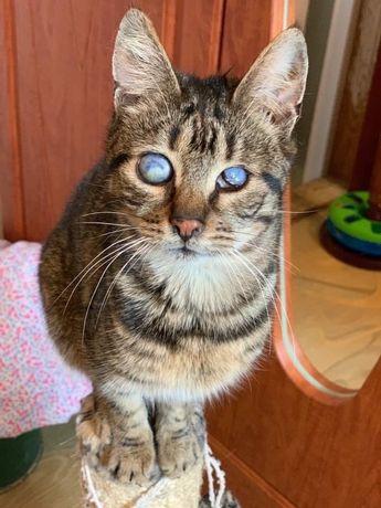 Котенок кошка кот особенные