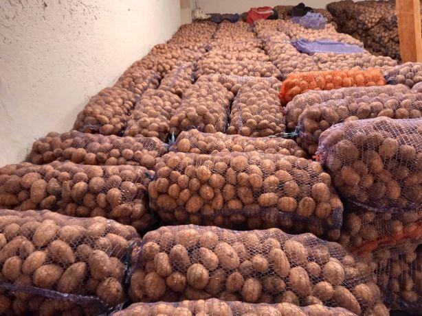 """Продажа семенного  картофеля """"Ревьера"""""""