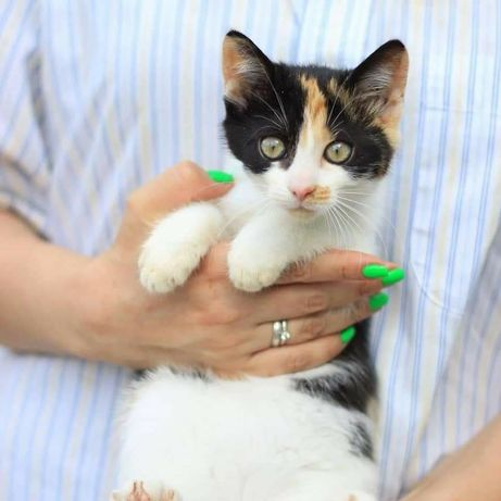 Котенок Маргаритка ищет любящую семью, котенок котята
