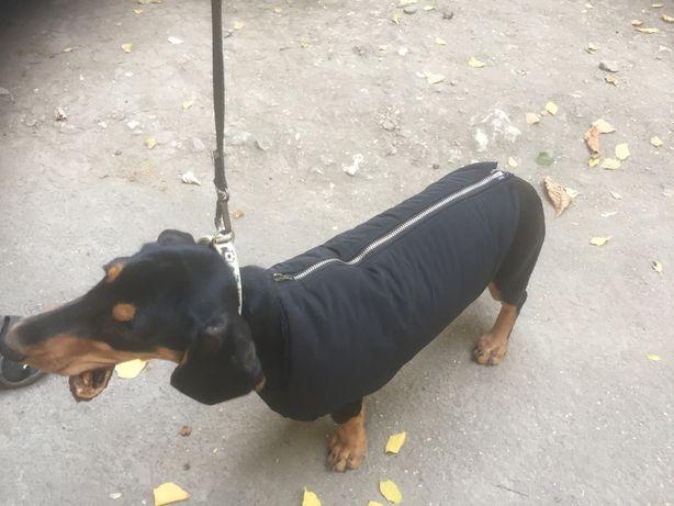 Осенняя и зимняя одежда для собак. Длинна спины до 35 см.