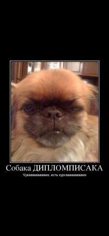Курсовые, дипломы по ПСИХОЛОГИИ и ПЕДАГОГИКЕ!!!
