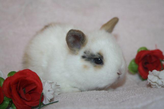 Выбираем себе мини кроликов по доступным ценам
