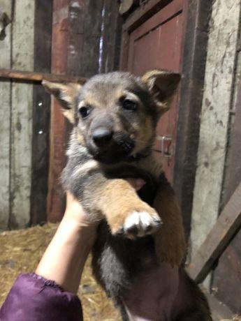 Нужны самые хорошие и добрые руки щенкам щенки даром