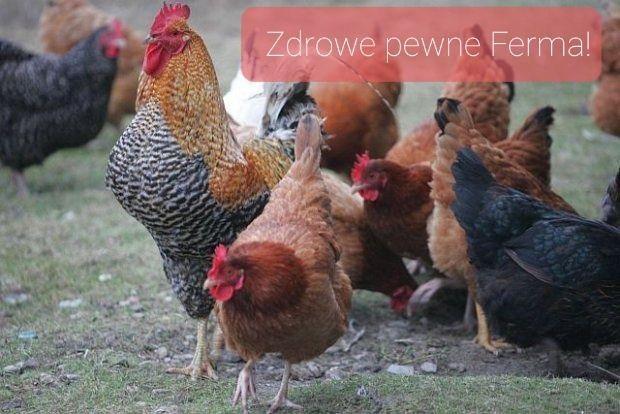Kokoszki kolorowe kury Mięsne Kaczki Gęsi Perliczki Brojlery ferma