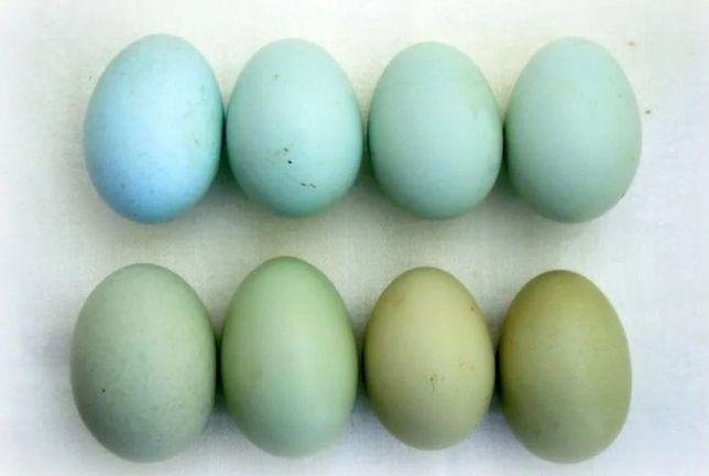 яйцо инкубационное Ухейилюй 120 руб/шт