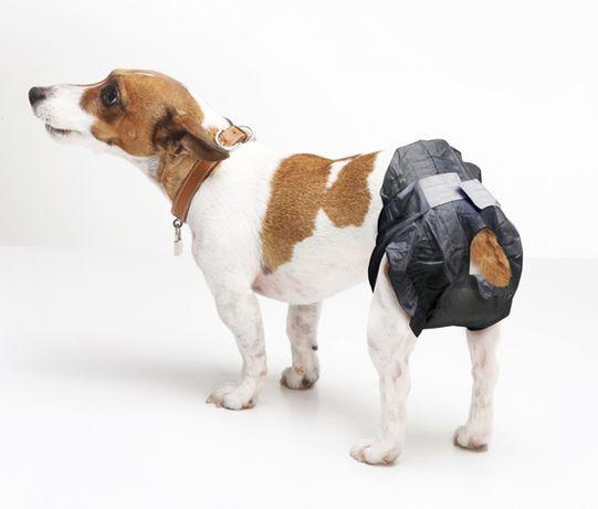 Fraldas para cães incontinentes
