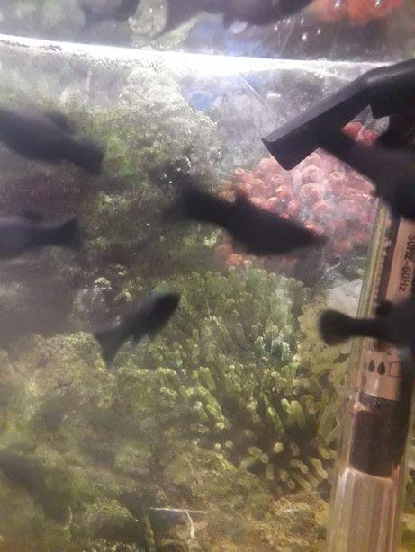 Продам рыбок в аквариум.