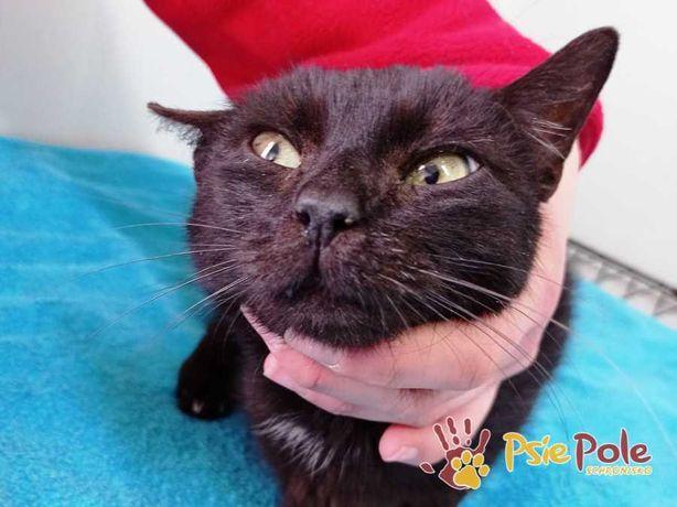 MALOYA-Kochana śliczna czarna mamulka szuka kochającego domu, adopcja