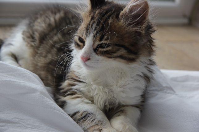 Котик, причина — переїзд.