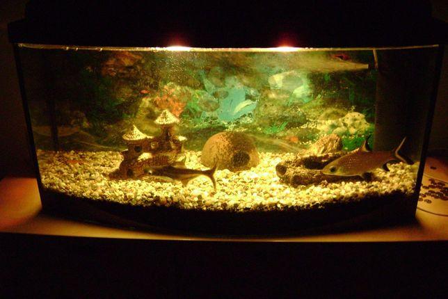 Akwarium panoramiczne 125L z pokrywą