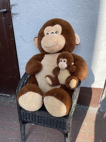 Ogromna małpka Miś 150cm