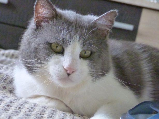 Умный мордатый кот Костик ищет семью