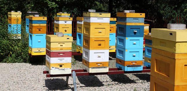 Zapisy na rodziny pszczele