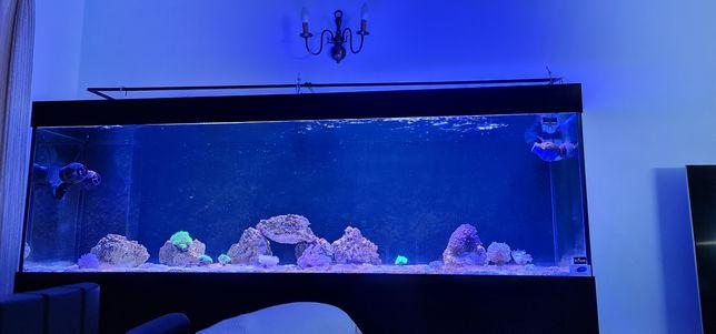 Aquario e estrutura 200x60x60