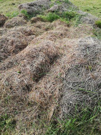 Kiszonka z trawy