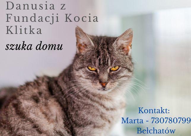 Kotka Danusia z Fundacji Kocia Klitka - szuka domu