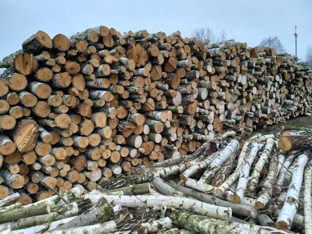 Drewno brzozowe, transport