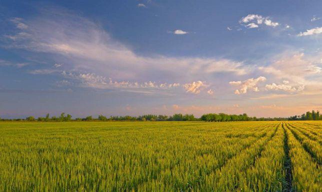 Инвестиции в аграрный сектор экономики Украины