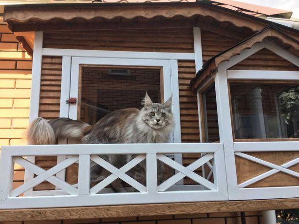 домики, лежаки для котов