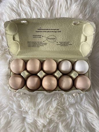 Pyszne swojskie jajka karmione naturalnie wolny wybieg