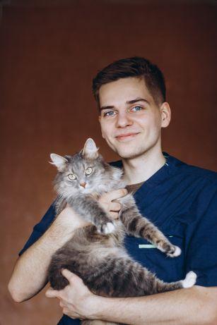Вызов ветеринара на дом с 5-летним опытом. Вакцинация.
