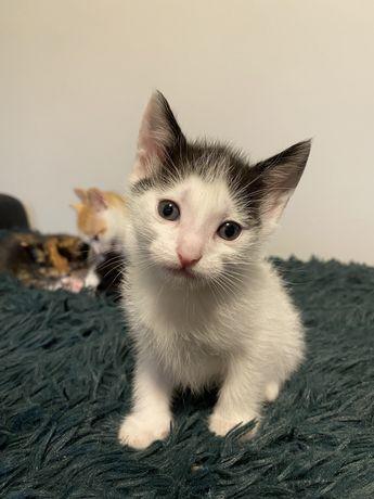 Czarno-białe kotki ZA DARMO