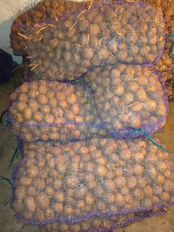 Продам насиньову картоплю