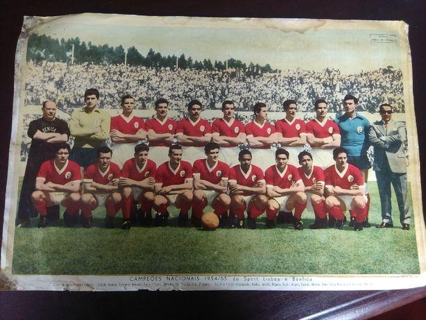 Poster Campeões Nacionais 1954/55 Benfica