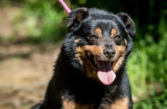 Max- cachorro para adoção