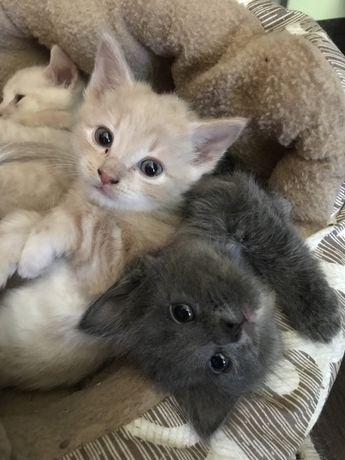 Отдам котят, 3 мальчика 1 девочка